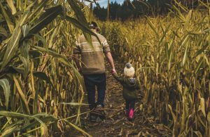 Westoba - Dad and Daughter walk in corn
